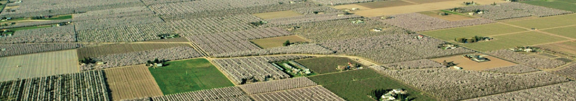 Bird's eye view of almond orchards