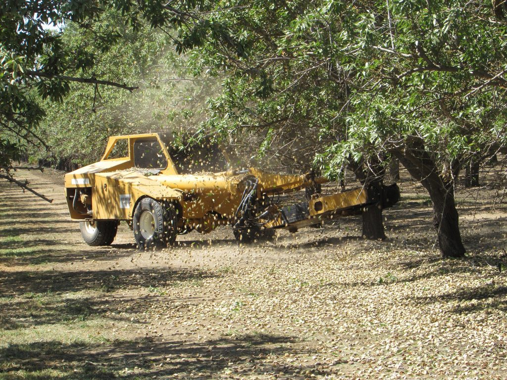 First orchard shaking – Kern County, CA