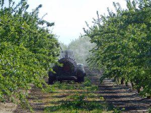 Fungicide treatment – Vernalis, CA