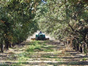 Mowing in Preparation for Harvest – Manteca, CA