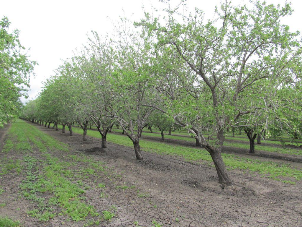Saturated Soil – Durham, CA
