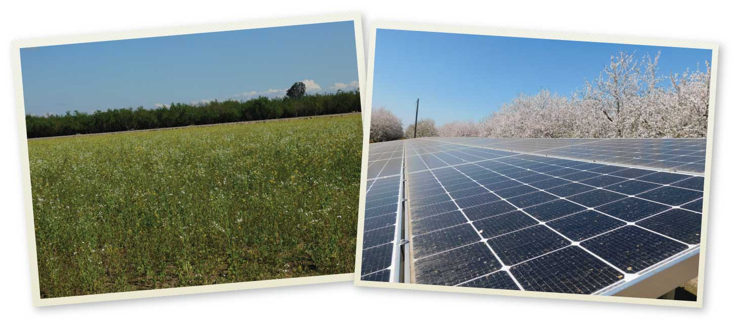Snapshots of solar panels and blossoming fields
